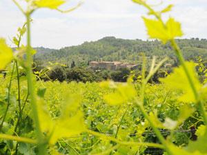 le château vu de loin dans les vignes