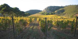 Vignoble Ollieux Romanis Corbieres entre Narbonne et Carcassonne