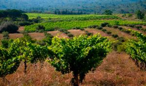 Photo le Vignoble des Corbières- Gîte Location vacances Corbières- Le Roc sur l'Orbieu