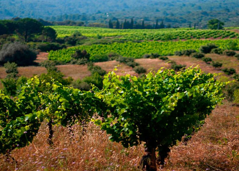 Vignoble-de-Corbieres-Gite et Location Vacances en Corbières - Le Roc sur l'Orbieu, entre Narbonne et Carcassonne