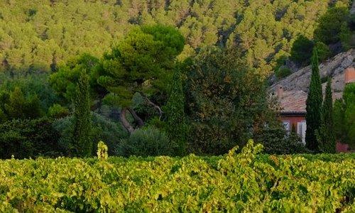 Paysage - Gite et Location Vacances en Corbières - Le Roc sur l'Orbieu, entre Narbonne et Carcassonne